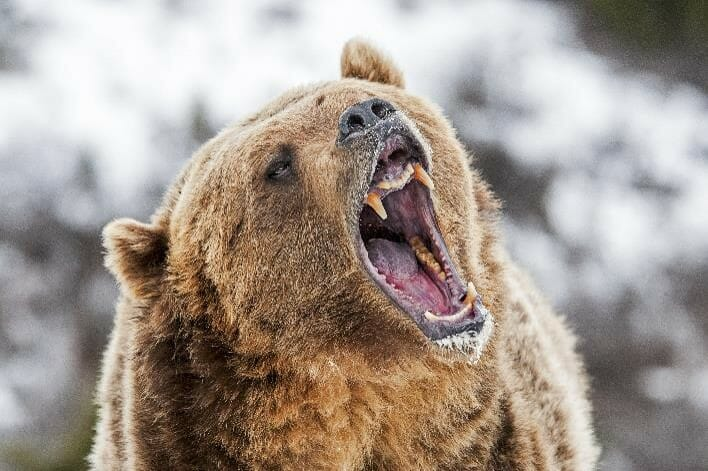 What To Do With Your Stock Trading When The Stock Market Loses Its Mind - Being Attacked By A Bear Causes Stress